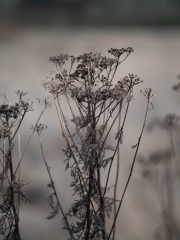 lovely 45mm lens, I loved shooting the weeds