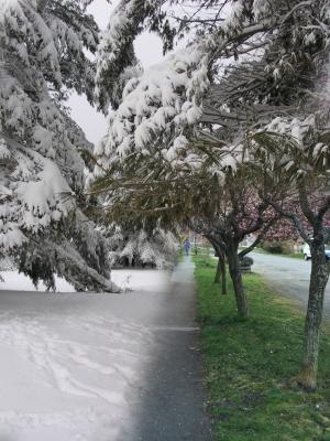 Maine snow on Polk Street